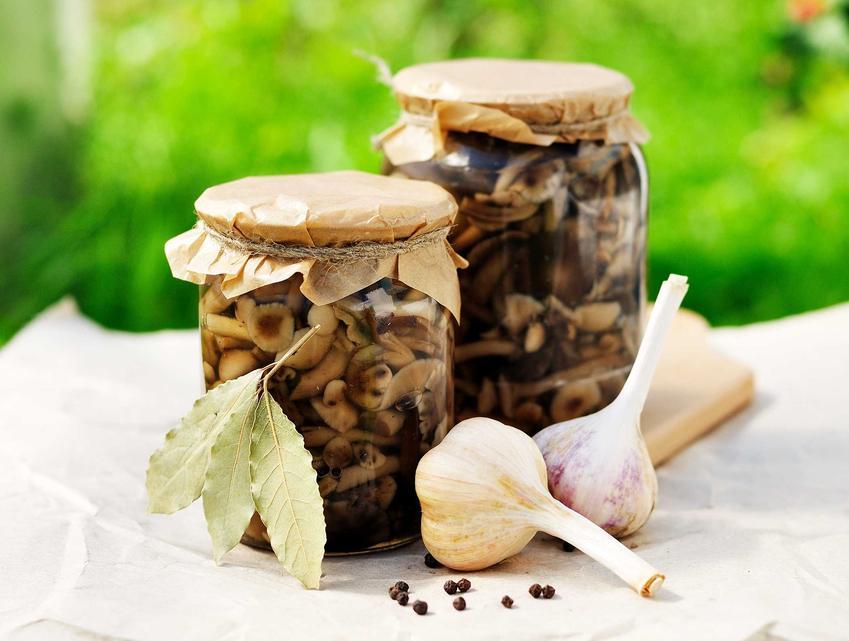 Grzyby marynowane w occie oraz zalewa do grzybów i marynata do grzybów, a także przepis na grzyby w occie