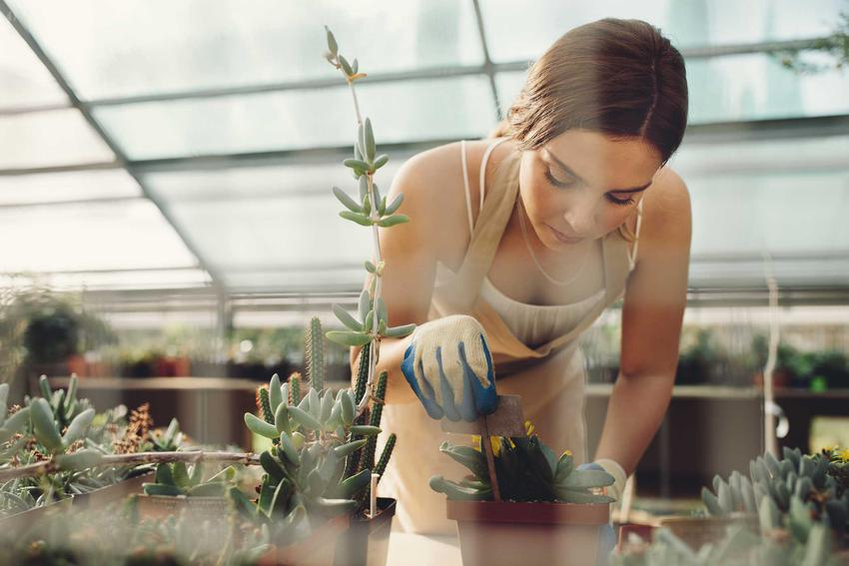 Młoda kobieta i kaktusy doniczkowe oraz porady, jak przesadzić kaktusa, czyli przesadzanie kaktusów w domu