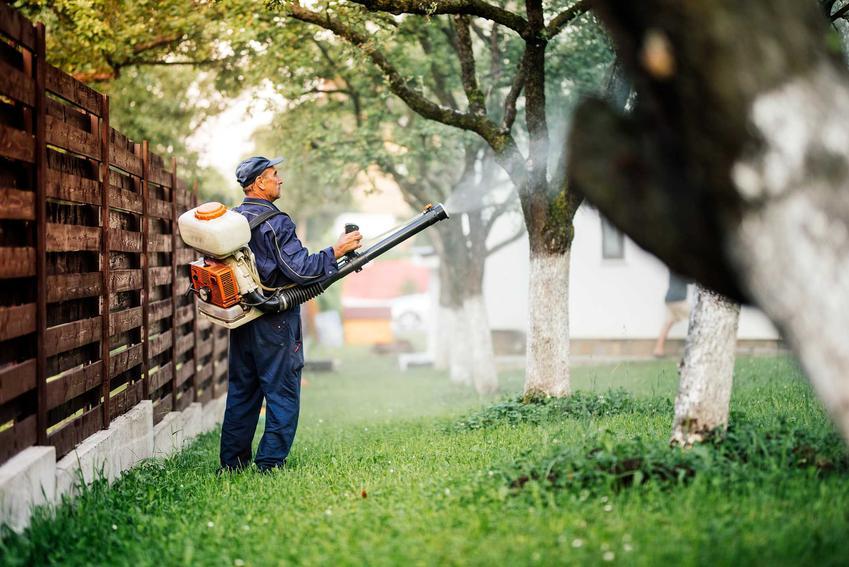 Oprysk na komary oraz opryski przeciw komarom w ogrodzie, a także najskuteczniejszy preparat na komary do ogrodu