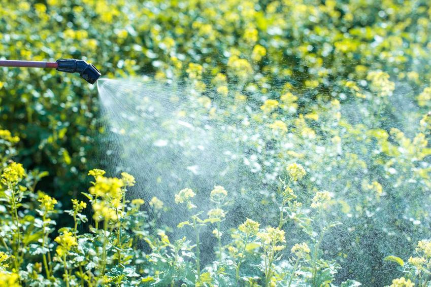 Oprysk na komary oraz opryski przeciw komarom w ogrodzie, a także najskuteczniejszy preparat na komary