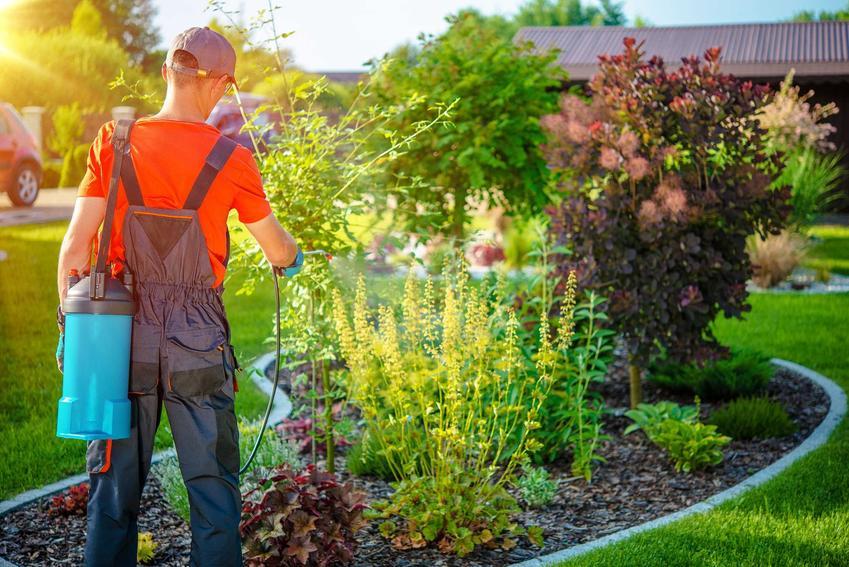 Oprysk miedzianem, czyli opryski drzew owocowych miedzianem i opryski drzew miedzianem w przypadku poważnych chorób roślin