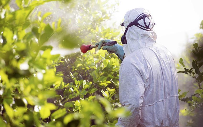 Oprysk drzew, a także miedzian na pomidory, a także miedzian na truskawki, miedzian na róże, na rododendrony i inne zastosowania miedzanu