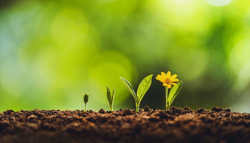 Nasiona kwiatów, jak kwiatów wieloletnich i kwiatów ozdobnych, a także sprzedaż w sklepie i hurtownia nasion