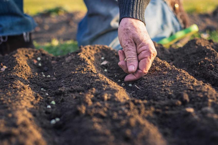 Wysiew roślin, w tym wysiew roślin jednorocznych, wysiew roślin dwuletnich i wysiew bylin w ogrodzie