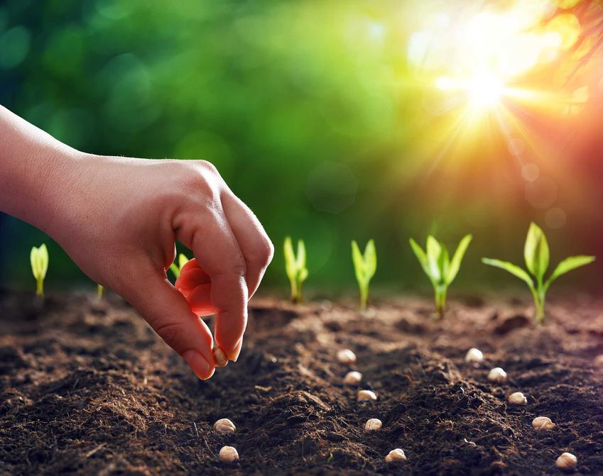 Wysiew roślin, w tym wysiew roślin jednorocznych, wysiew roślin dwuletnich oraz wysiew roślin bylinowych krok po kroku