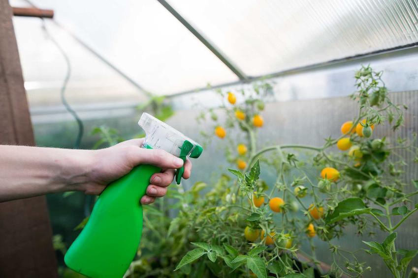 Nawożenie pomidorów w szklarni, a także informacje o nawozach: skłąd, rodzaje, sposób podania, najlepsi producenci