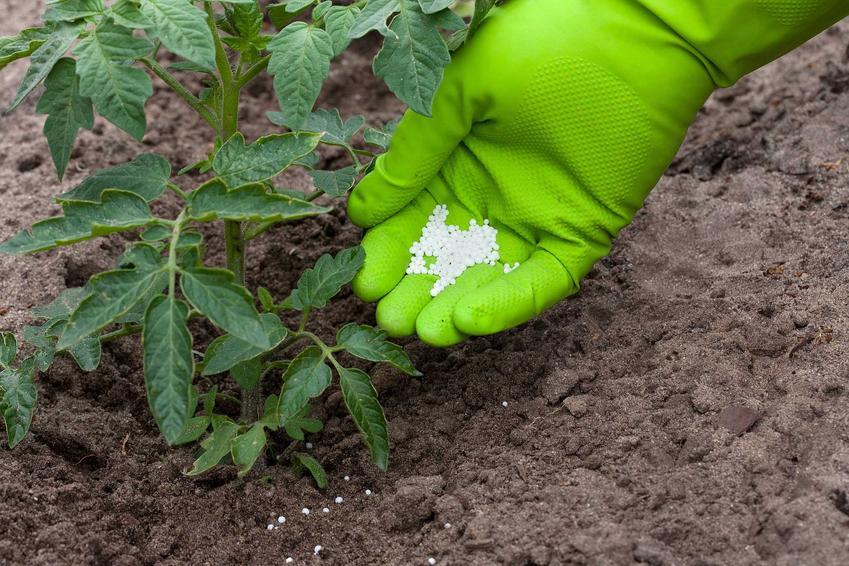 Nawóz do pomidorów,, czyli nawożenie pomidorów szklarniowych i uprawianych pod folią i w tunelach foliowych, a także najlepsze nawozy