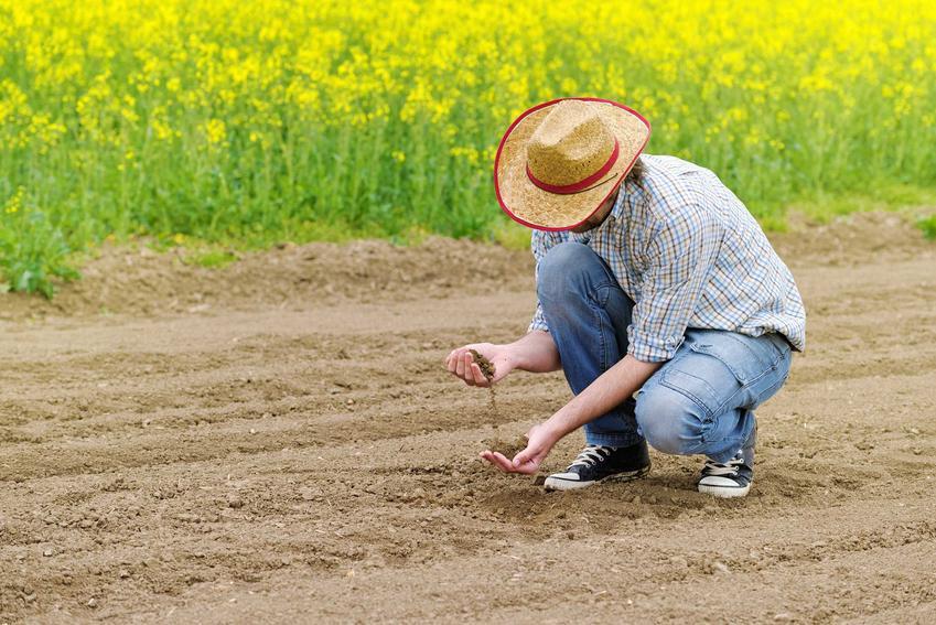 Nawożenie rzepaku oraz uprawa rzepaku ozimego, czyli nawóz pod rzepak jesienią i wiosenne nawożenie roślin na polu