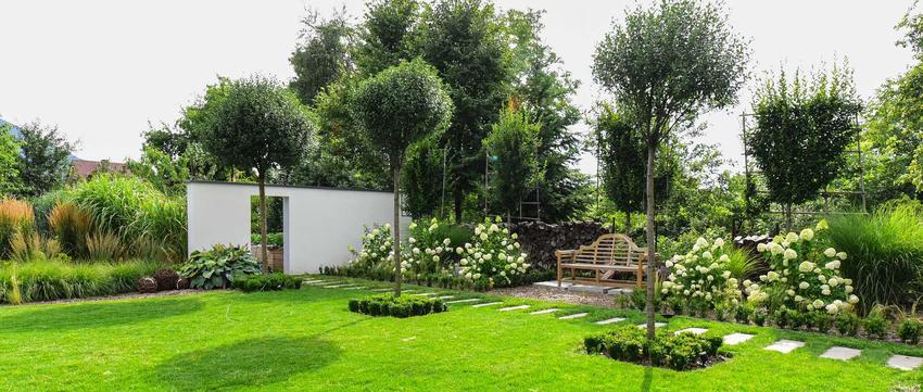 Drzewa szybko rosnące w ogrodzie, czyli najszybciej rosnące drzewa i krzewy ozdobne do ogrodu oraz porady związane z pielęgnacją