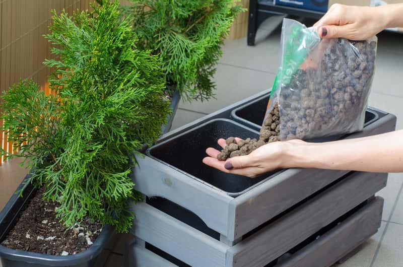 Sadzenie iglaków na balkon, a także najlepsze gatunki i odmiany iglaków na balkon i do uprawy doniczkowej