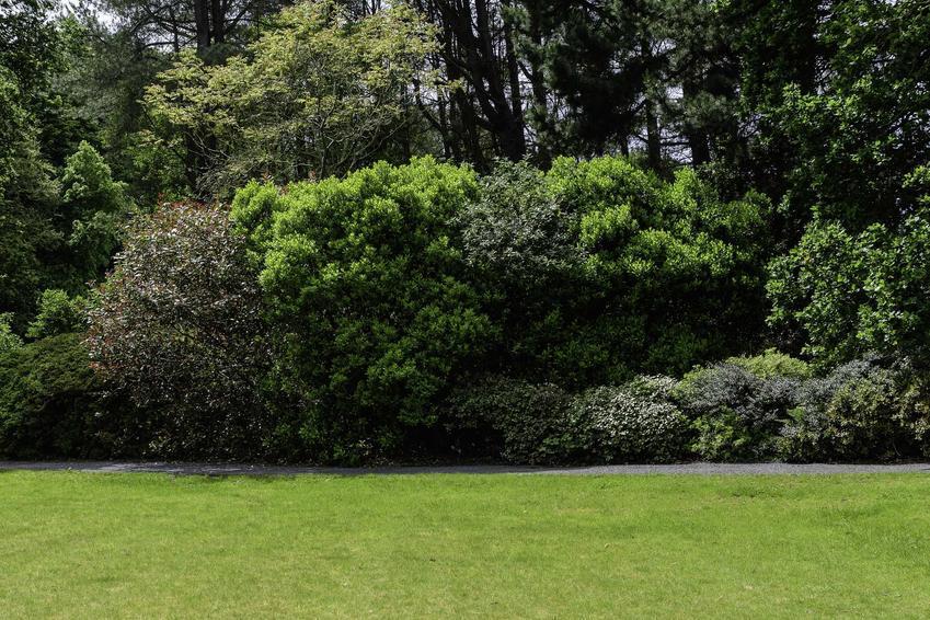 Drzewka w ogrodzie, a także formowanie drzewek, kształtowanie drzew i formowanie drzew ozdobnych liściastych i iglastych krok po kroku