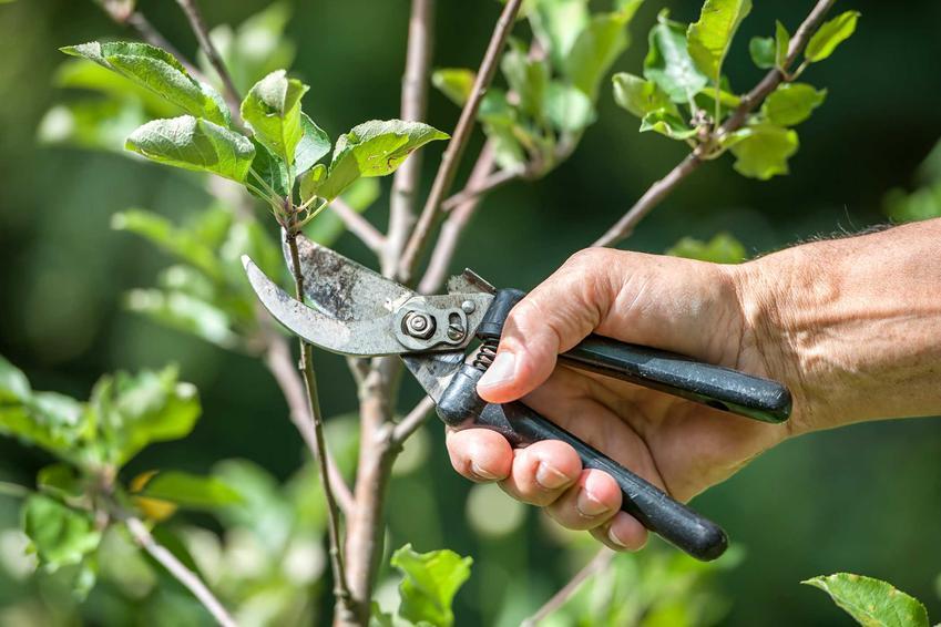 Formowanie krzewów ozdobnych oraz formowanie drzewek, a także polecane krzewy ozdobne, idealne do formowania krok po kroku