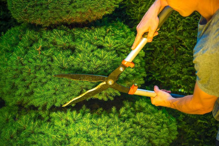 Formowanie krzewów ozdobnych oraz formowanie drzewek, a także polecane krzewy ozdobne formowane przez przycinanie