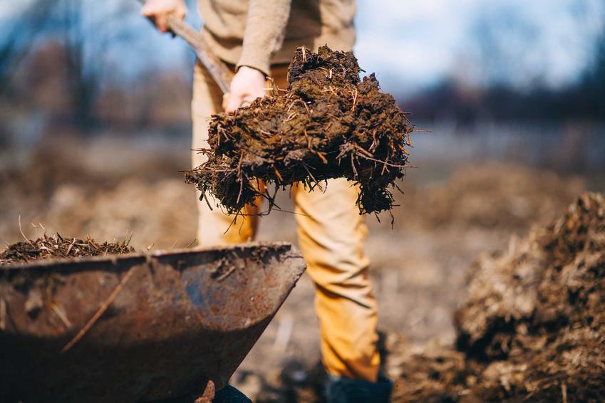 Obornik jako nawóz organiczny, czyli nawożenie organiczne i polecane nawozy naturalne krok po kroku, najlepsze nawozy naturalne