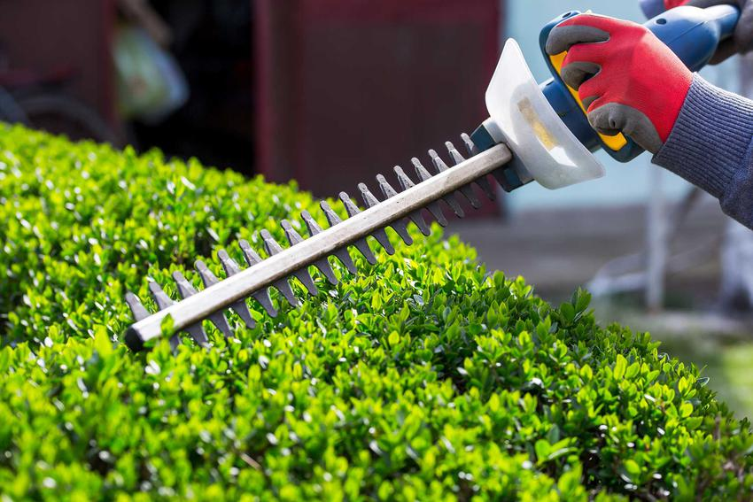 Akumulatorowe nożyce do żywopłotu, czyli elektryczne nożyce do żywopłotu, a także spalinowe nożyce do żywopłotu