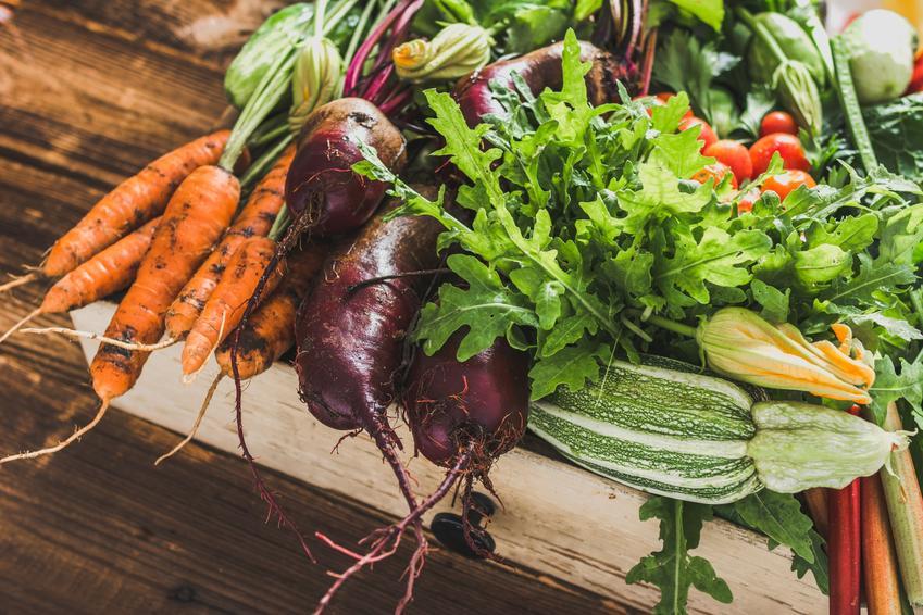 Warzywa zebrane w ogrodzie oraz porady kiedy zbierać wazrywa, czyli terminy zbioru warzyw