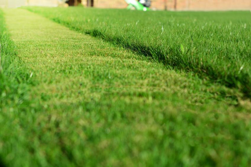 Częściowo skoszony trawnik, a także sposoby na strzyżenie i koszenie trawników