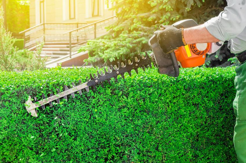 Spalinowe nożyce do żywopłotu podczas użycia oraz polecane nożyce spalinowe do ogrodu