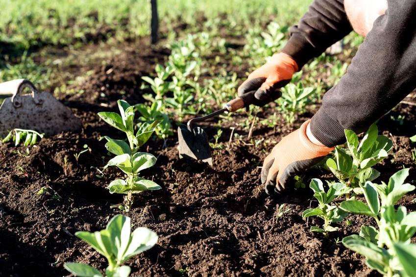 Pielenie chwastów w ogrodzie, a także polecane narzędzia do pielenia i plewienia chwastów