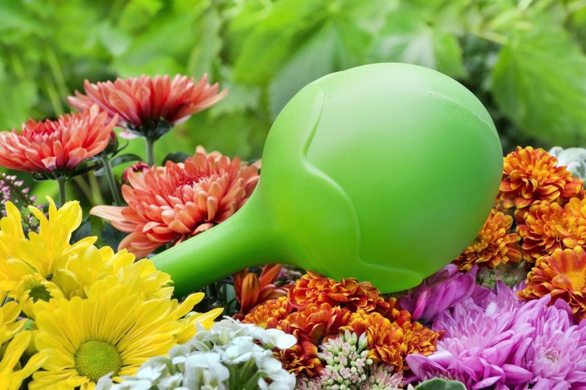 Zielona kula nawadniająca do kwiatów, a także polecane kule nawadniające do doniczek i ich cena