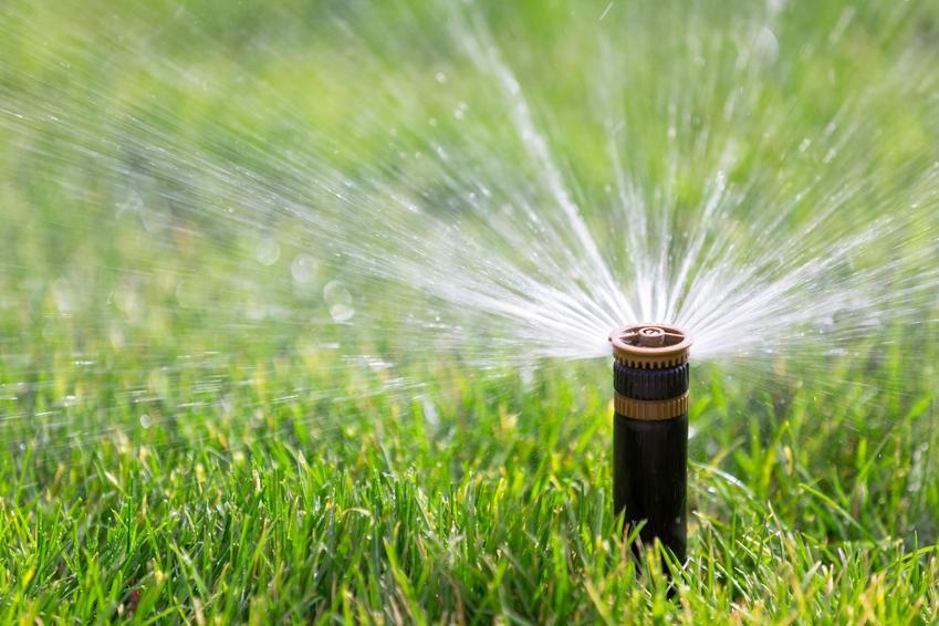 Podlewanie trawnika i poldewanie trawy krok po kroku oraz najlepsze porady