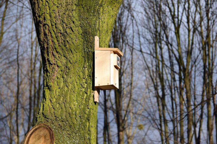Domek dla ptaków na drzewie, a dokładniej budki dla ptaków i budki lęgowe