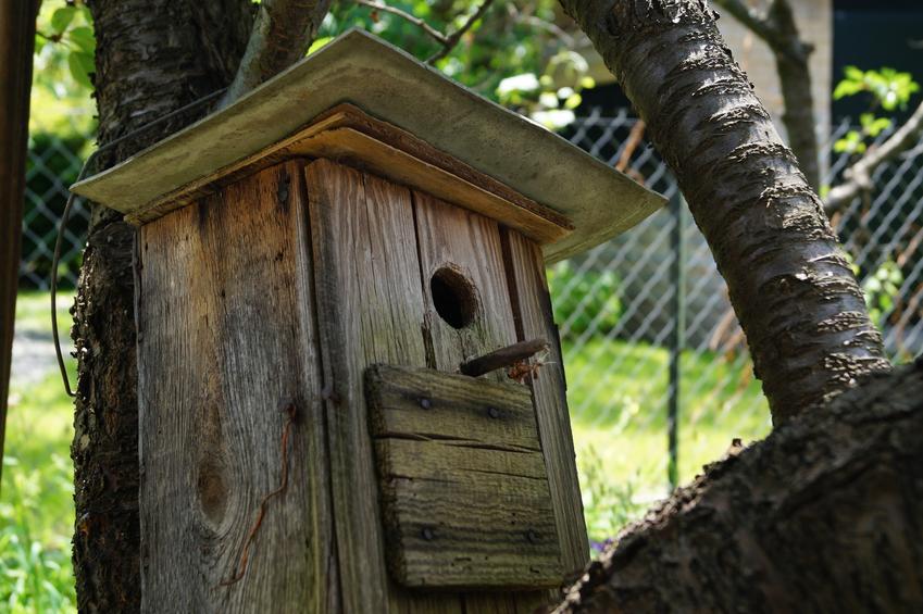 Budka lęgowa dla ptaków, a także polecane budki dla ptaków i skrzynki lęgowe dla ptaków