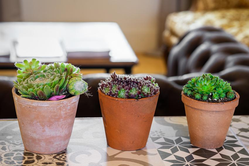 Kaktusy doniczkowe oraz podłoże do kaktusków, które trzeba im zapewnić