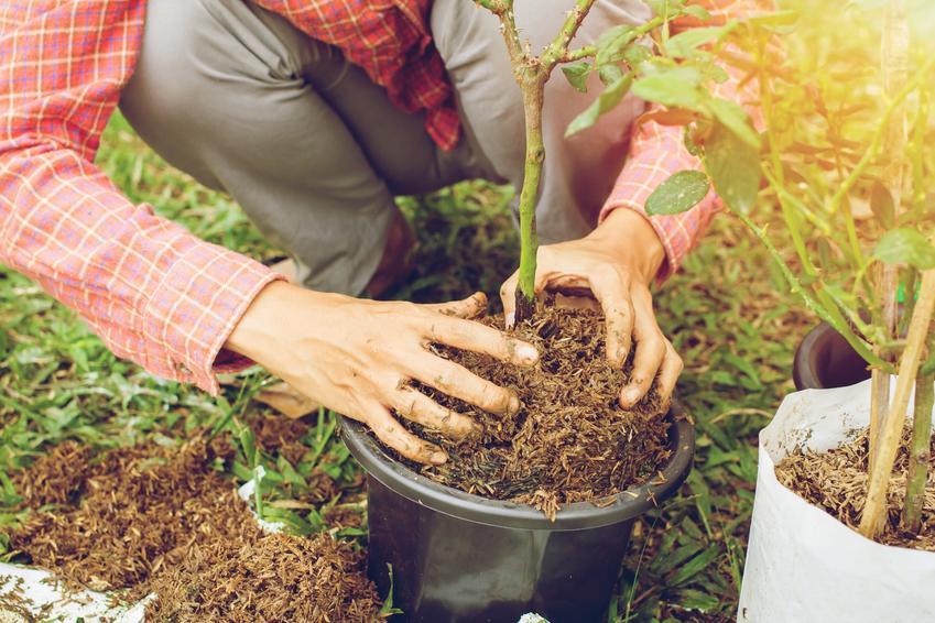 Sadzenie róż, a także odpowiednia ziemia do róż, czyli jaka gleba się nada pod róże