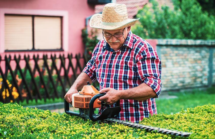 Spalinowe nożyce do żywopłotu i inne rodzaje nożyc do cięcia żywopłotu w ogrodzie