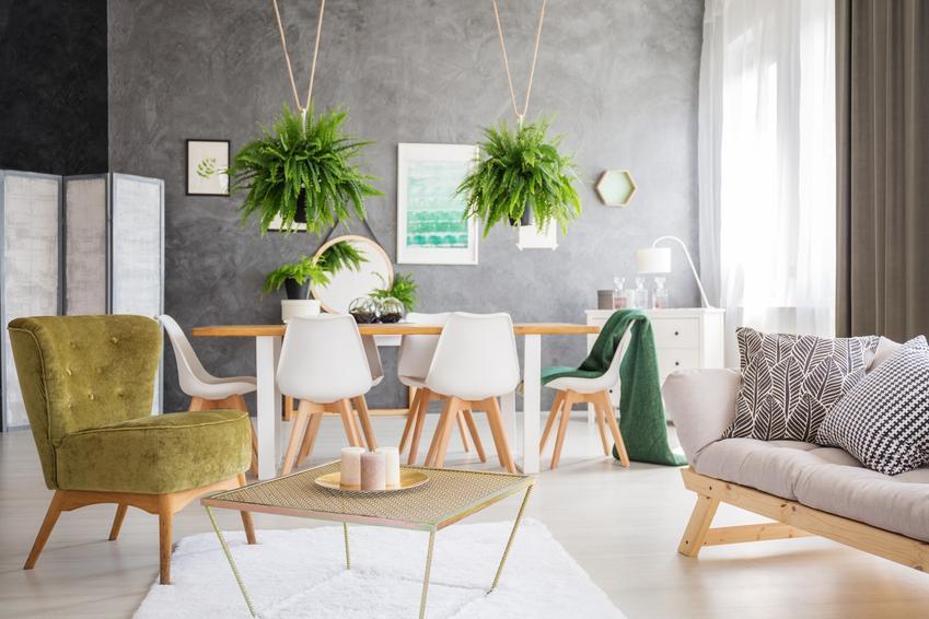 Paprotki wiszące w pięknym salonie, a także inne rośliny oczyszczające powietrze w domu