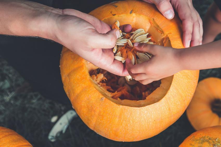 Dynia podczas wyjmowania miąższu, a także porady jak wydrążyć dynię na halloween krok po kroku