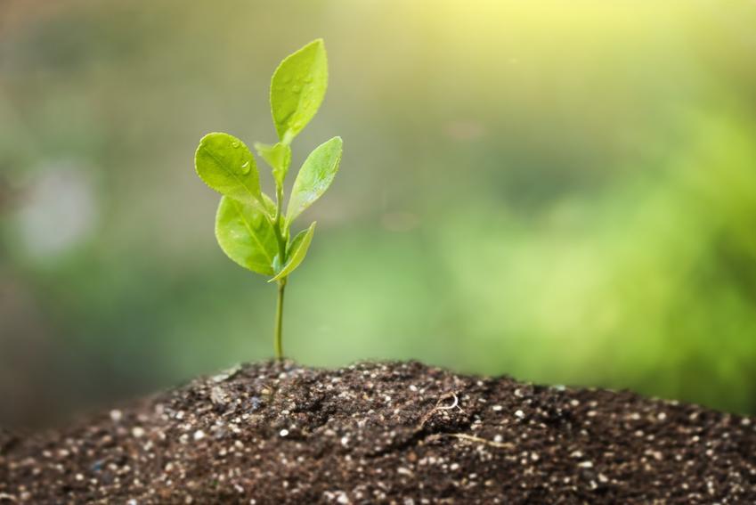 Sadzonka rośliny w glebie, a także informacje ile trwa okres wegetacyjny w Polsce