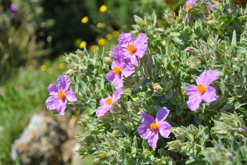 Kwitnące kwiaty w ogrodzie oraz okres wegetacyjny w Polsce, czyli okres wegetacji roślin