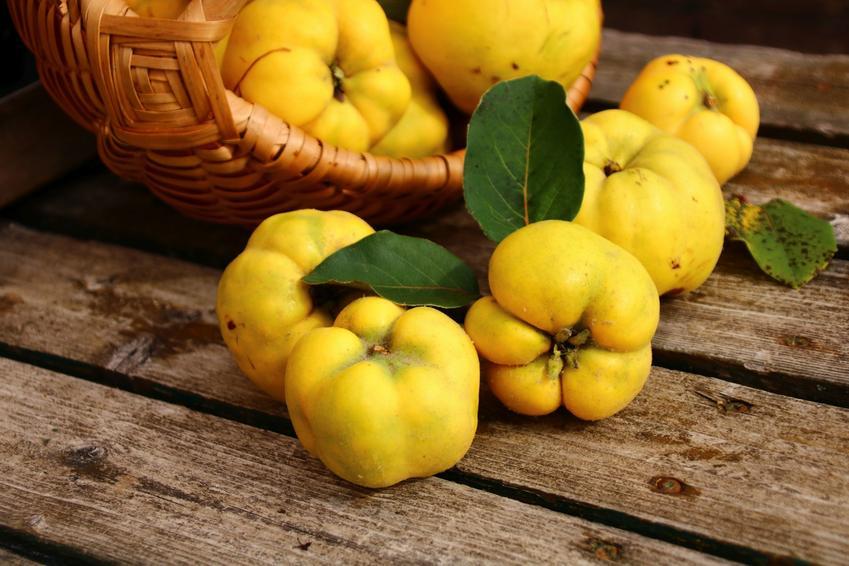 Owoce pigwy na drewnianym stole, a także owoc pigwy i jego zastosowanie