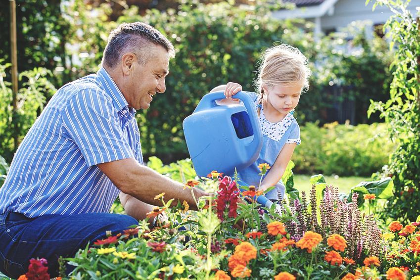 Dziewczynka podlewająca kwiaty z tatą, a także sadzonki kwiatów ogrodowych i ich zakup