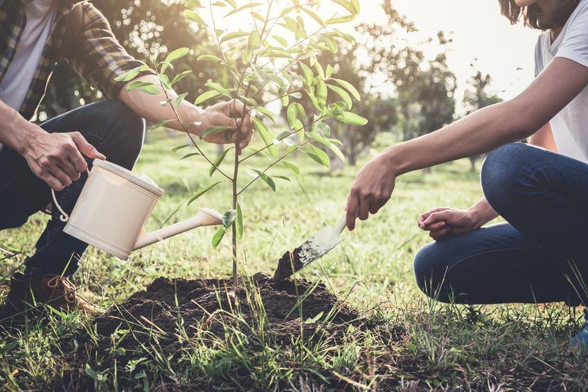Sadzonki drzew podczas sadzenia, czyli sadzonki drzew owocowych i liściastych