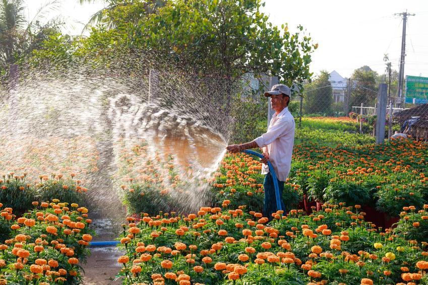 Jak podlewać ogródki działkowe?