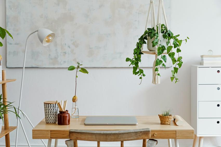 Kwiat zwisający w domu nad biurkiem, a także pomysły na kwiaty wiszące do domu na balkon