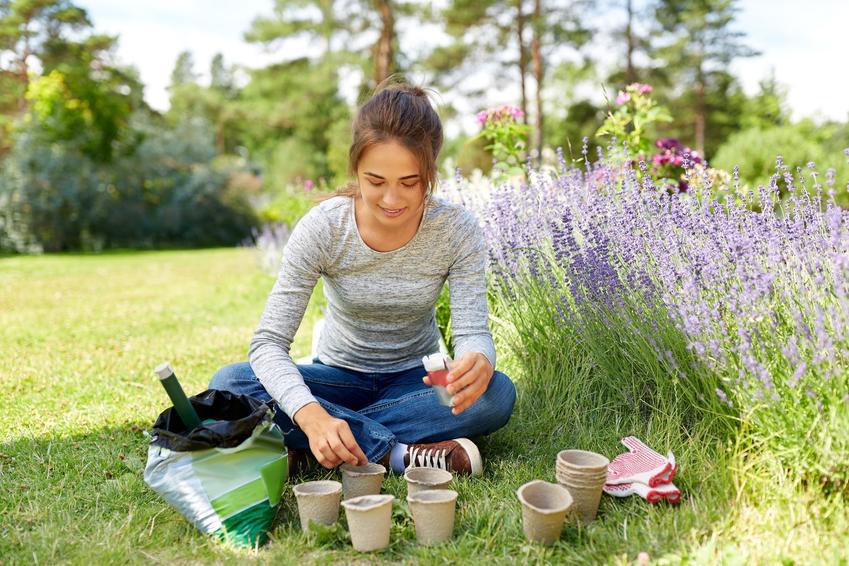 Sadzenie lawendy przez kobietę w ogrodzie, a także uprawa lawendy i pielęgnacja
