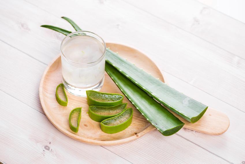 Sok z aloesu w szklance oraz świeży cięty aloes, a także przeciwwskazania picia soku z aloesu