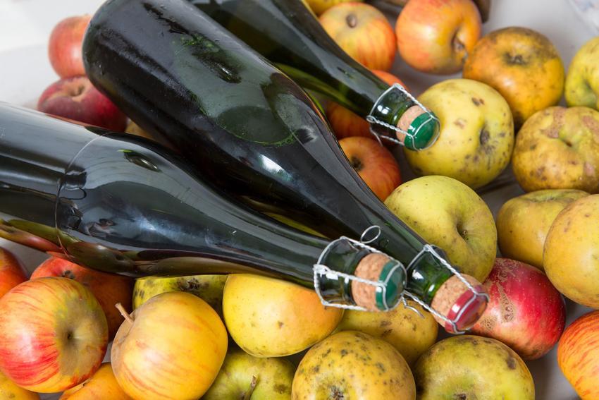 Butelki z cydrem leżące na jabłkach, a także przepis i porady, jak zrobić cydr jabłkowy