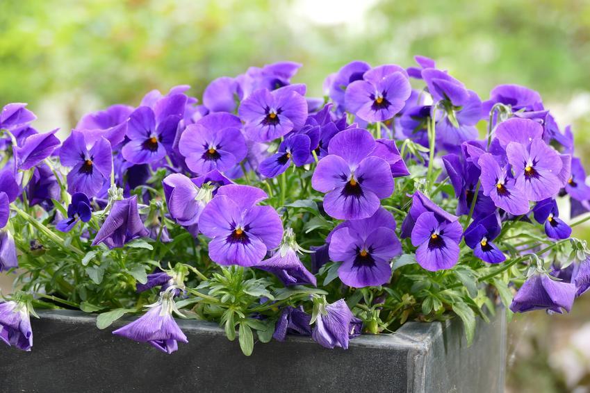 Kwiaty na taras, czyli jak urządzić ogród na tarasie