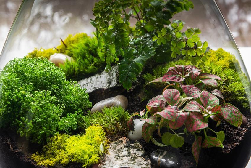 Ekosystem w słoiku – opis, instrukcje, pielęgnacja, porady