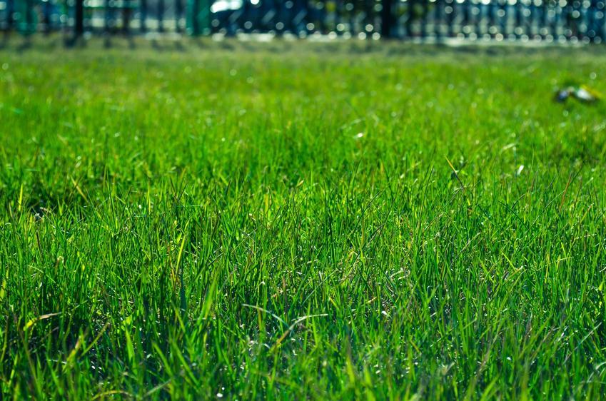 Montaż trawy z rolki: samodzielnie czy zlecić firmie?