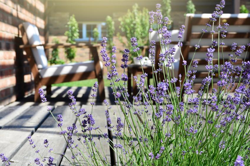 Projekt ogrodu - jak zabrać się do zakładania ogrodu aby był nowoczesny?