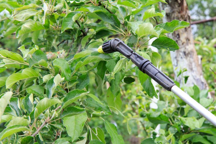 Drzewa w ogordzie podczas oprysku, czyli oprysk mocznikiem i opryskiwanie drzew mocznikiem