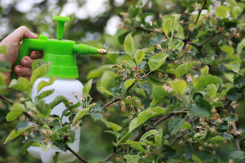 Opryskiwanie drzew mocznikiem w ogrodzie, czyli jak i kiedy przeprowadzić oprysk mocznikiem