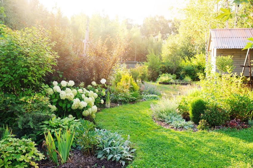 Pięknie zaaranżowany ogród, a także krzewinka hebe i roślina doniczkowa hebe