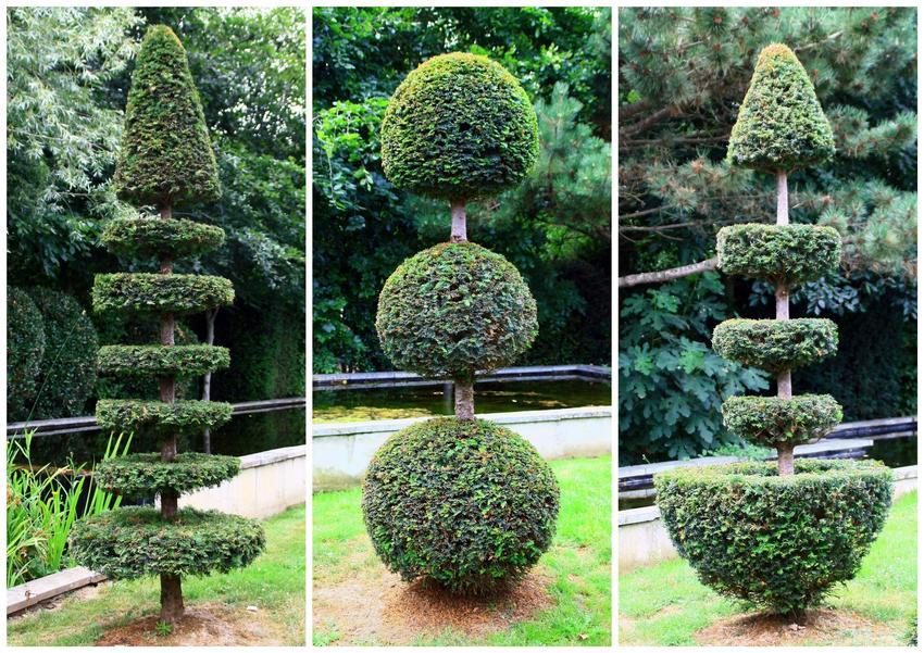 Uformowane krzewy w ciekawy sposób, a także formowanie iglaków, ozdobne formowanie iglaków w ogrodzie